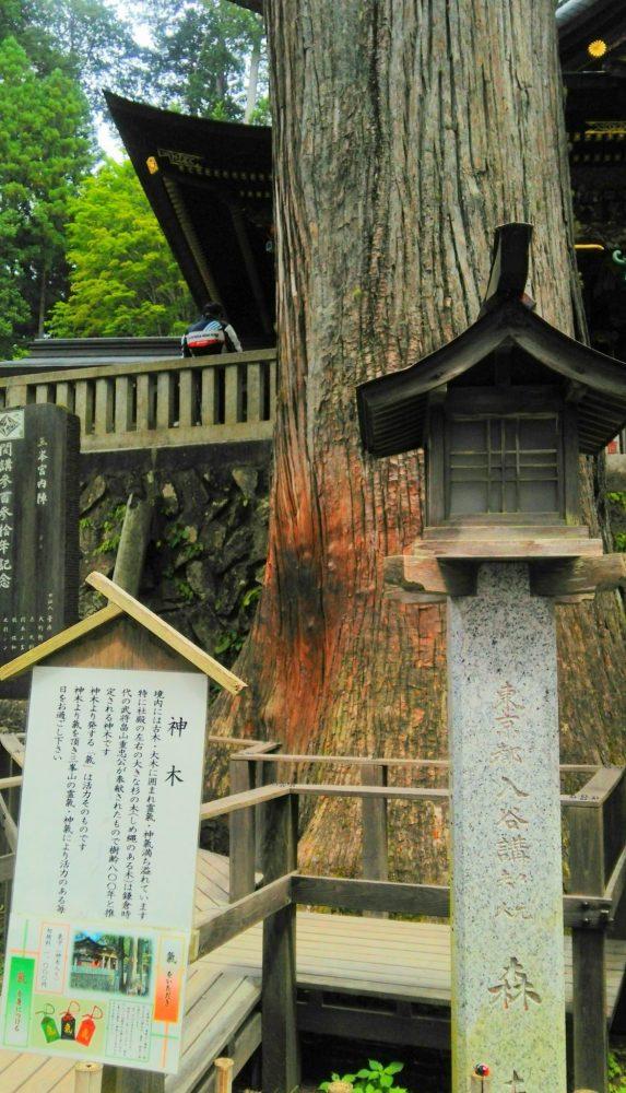 三峰神社 ご神木