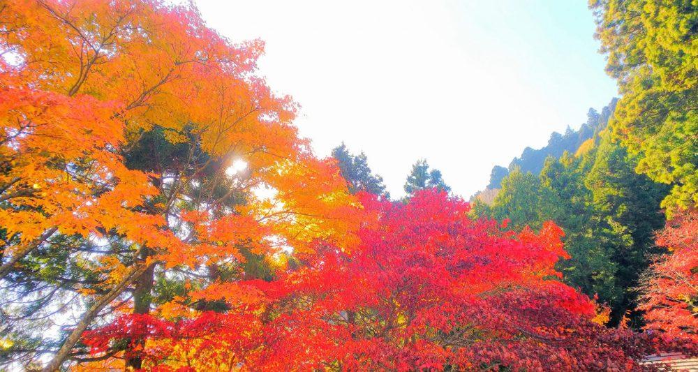 大山 紅葉 神奈川県